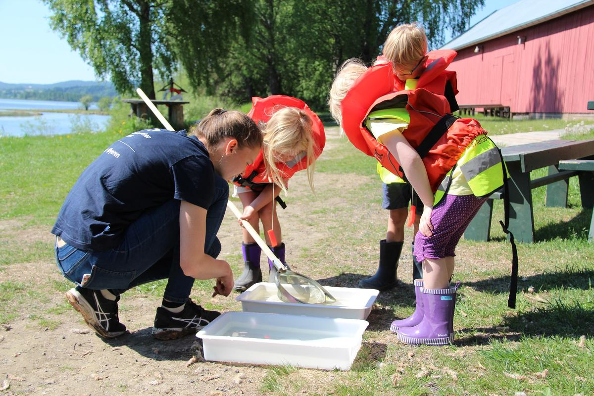 Naturveileder viser barn insekter i vannet (Foto/Photo)