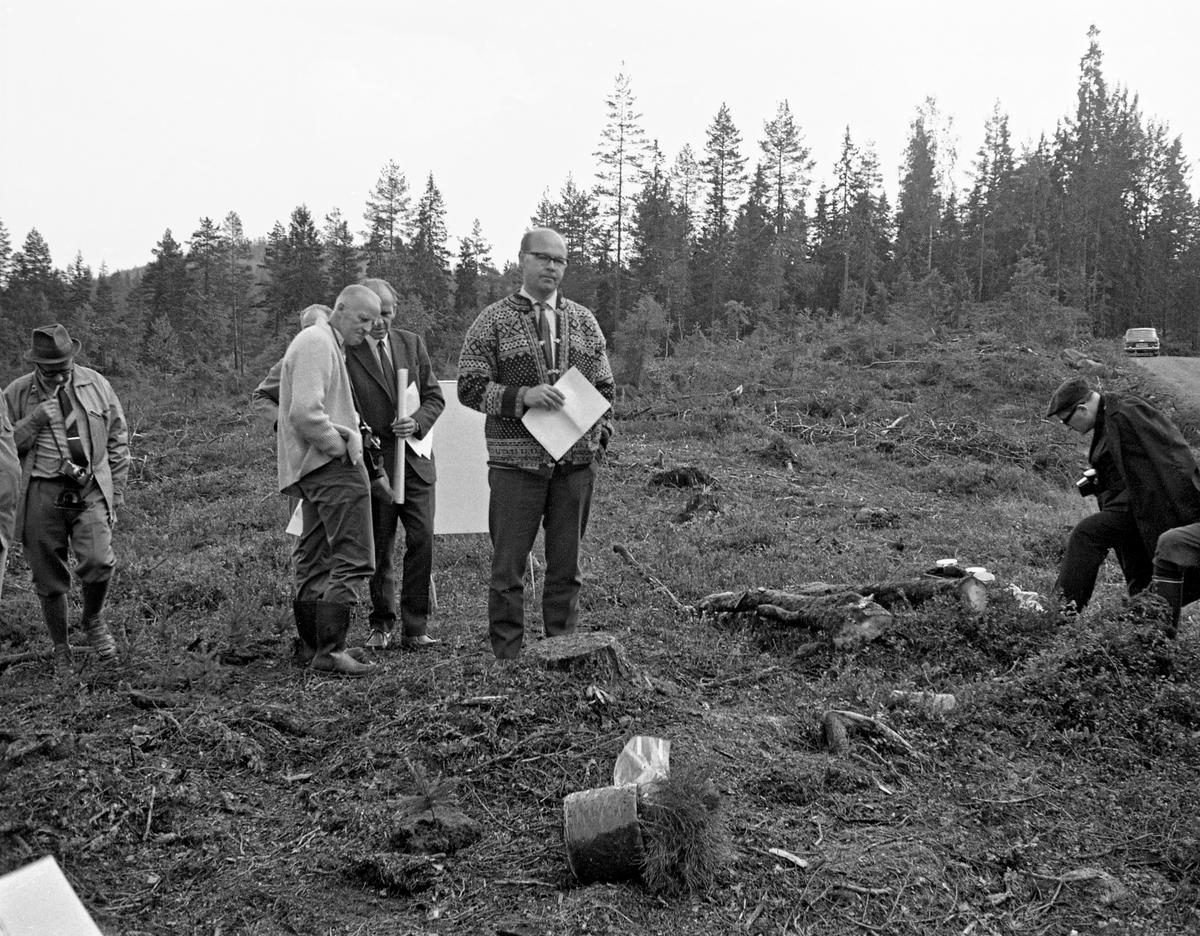 Forsøksleder Alf Bakke (f. 1927) fra Det norske skogforsøksvesen ...