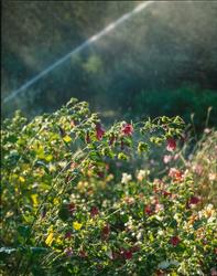 Skansens trädgårdar, köksträdgård, odlingar.