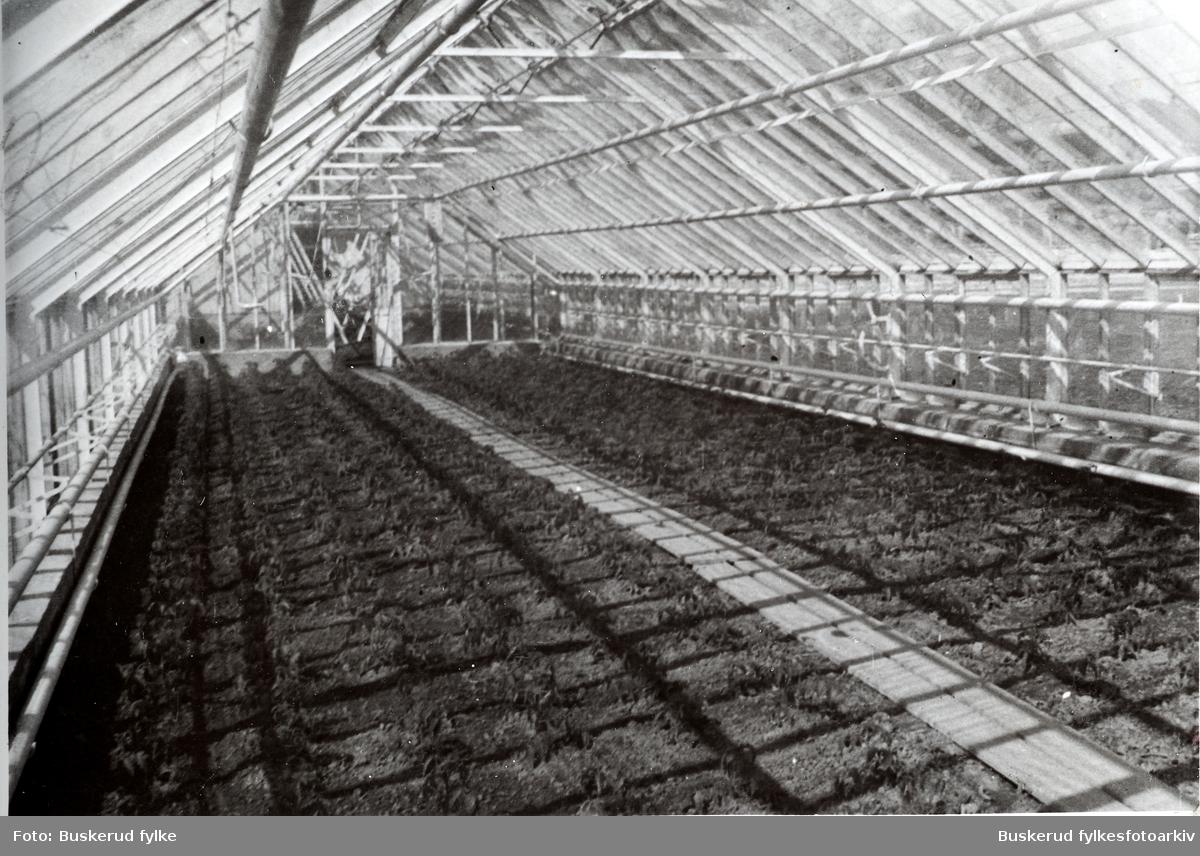 Buskerud gård Fra skolens drivhus