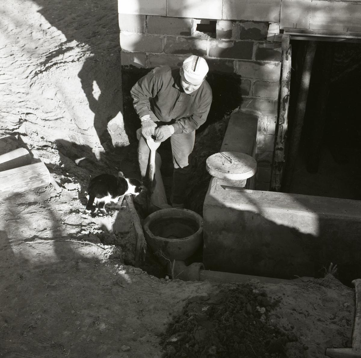 En man arbetar med avloppsrör och en katt tittar nyfiket på vid gården Sunnanåker, 1967.
