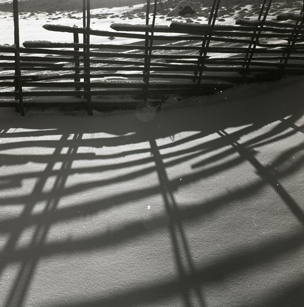 Gärdesgård i motljus som kastar skuggor på snön, Lenninge, 31 januari 1960.