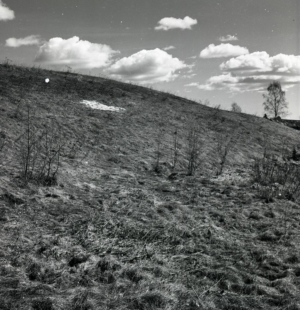 Sista snön vid Tossbro i april 1951.