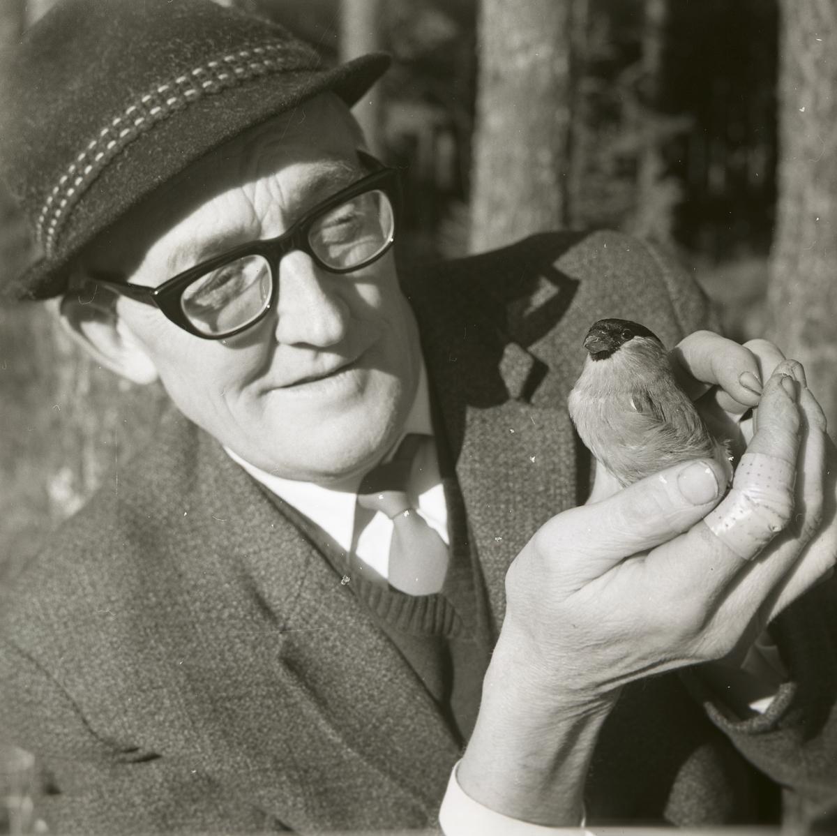 En man iklädd hatt och glasögon håller en domherre i sina händer under våren 1968.