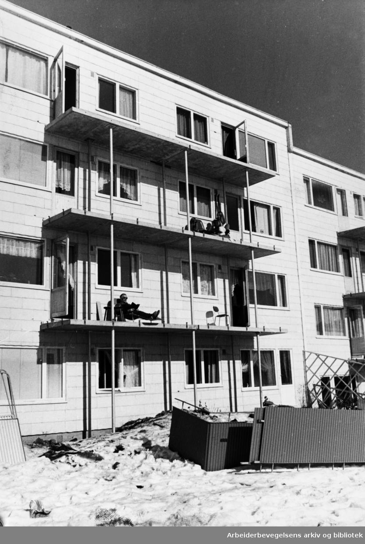 Ammerud. Ammerudveien. Borettshaverne får bakonger. Mars 1970