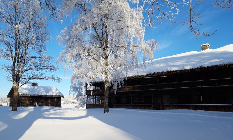 Svalgansbygning vinter 2019 cropped (Foto/Photo)