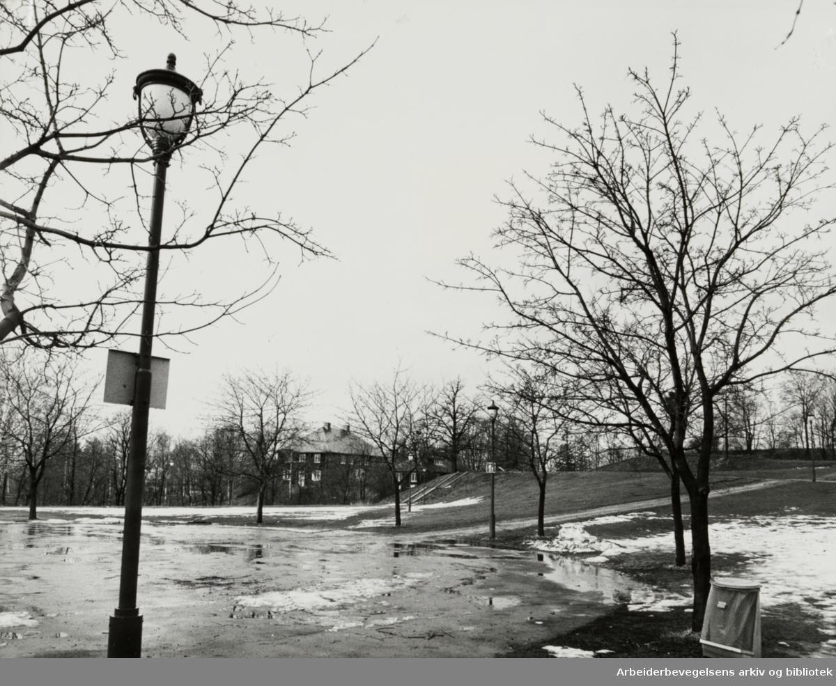 Frøen. April 1979