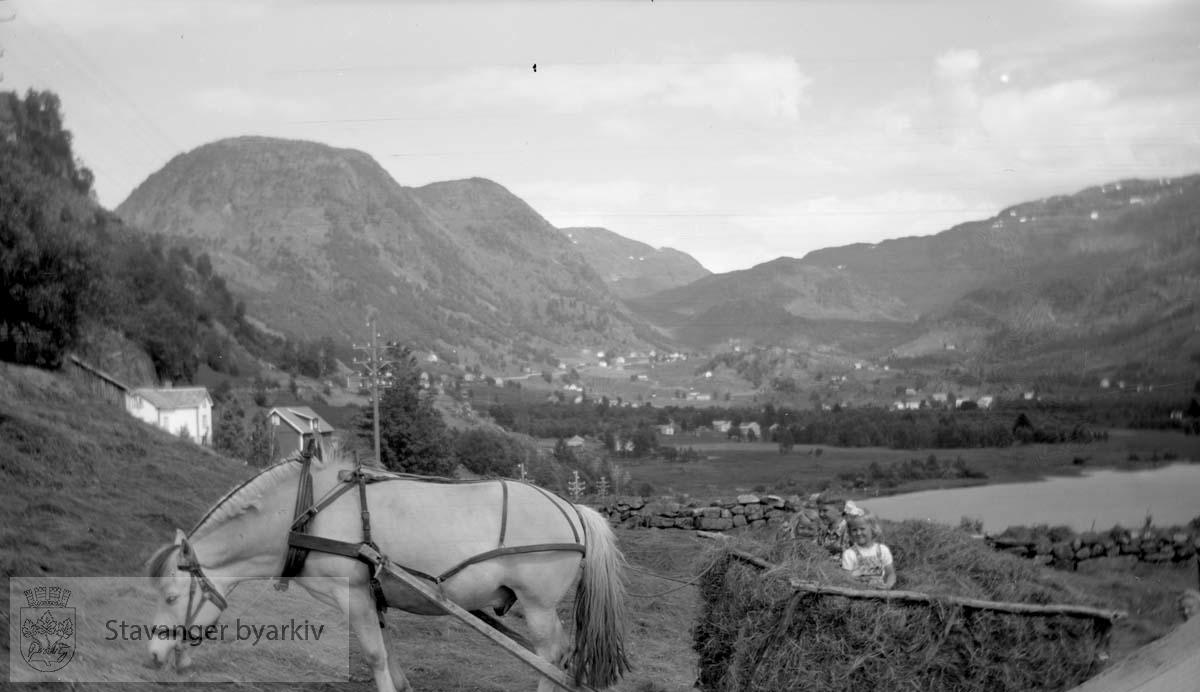 Gårdsarbeid med hest og vogn