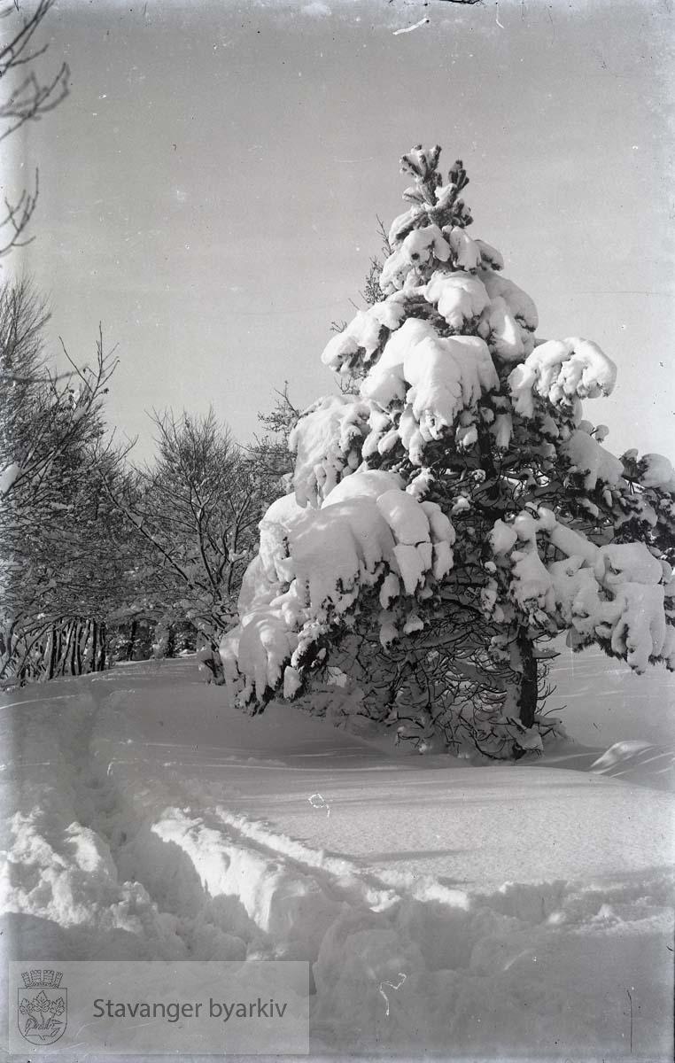 Turvei i snøen