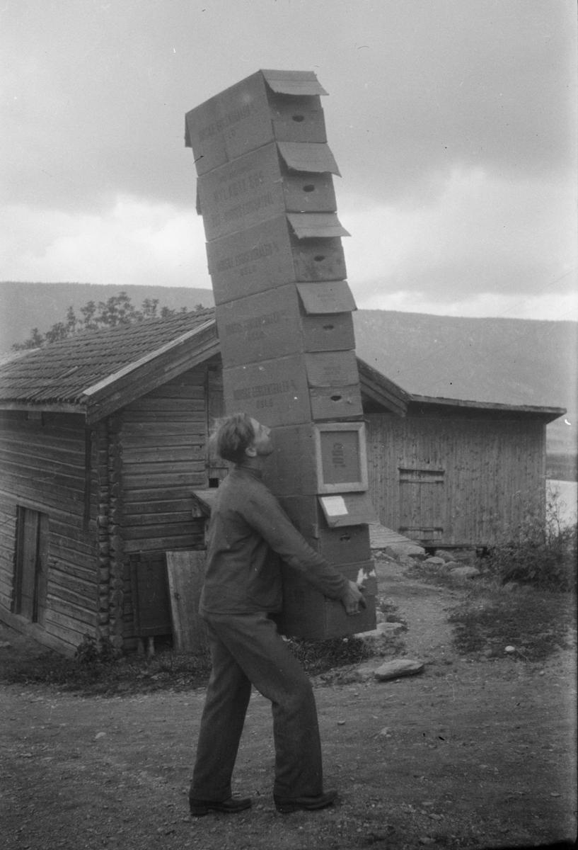 Cornel Ring bærer tomkartonger på Linjordet, Østre Gausdal