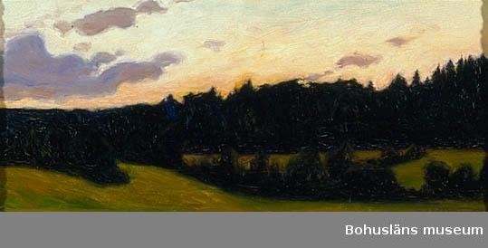 Landskap med mörk skogsrand och kvällshimmel med moln.