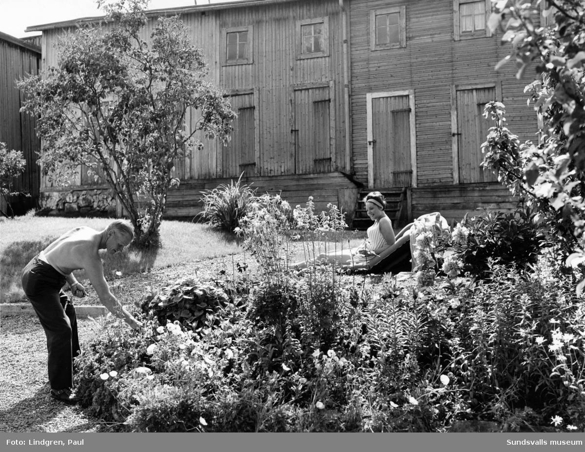 Motiv taget i samband med Södermalmsinventeringen 1963. Trädgård på okänd gård.
