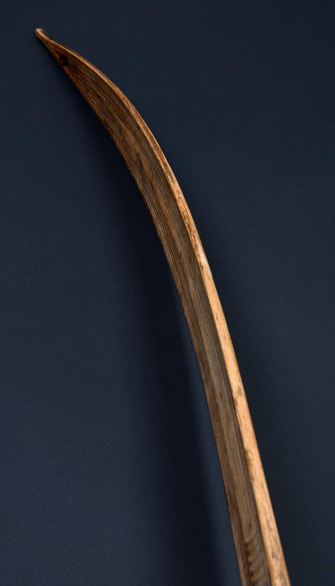 Langstrakt oppbøyd spisst horn. Oversiden hvelvet med rygg. Spiss bak.