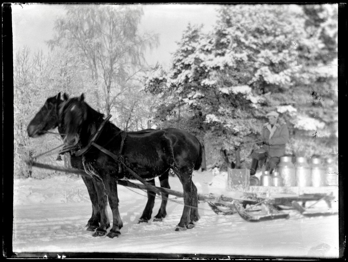 Halvdan Larsson kör ut mjölk med hästsläde