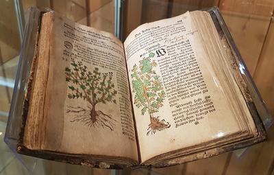 Gammel bok som ligger oppslått slik at vi ser håndfargede tegninger av urter og tekst satt med gotiske bokstaver.