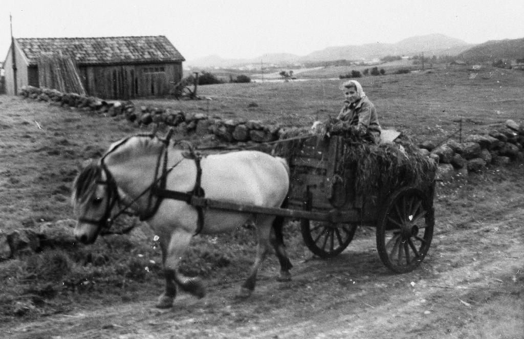 Hesten er ein Fjording. Ei jente køyrer gras til siloen i ei skjidkjerra med karmar. Reiskapshus og Heiatjødno i bakgrunnen.