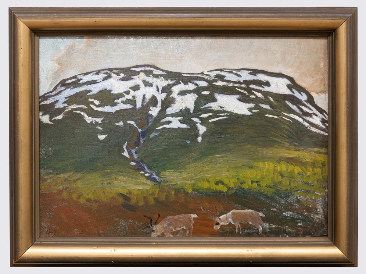 Landskapsbild med fjället Nuolja, delvis snötäckt. I förgrunden två betande renar.