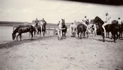 Kavalleriskolan badar hästar vid Stöckesjön.