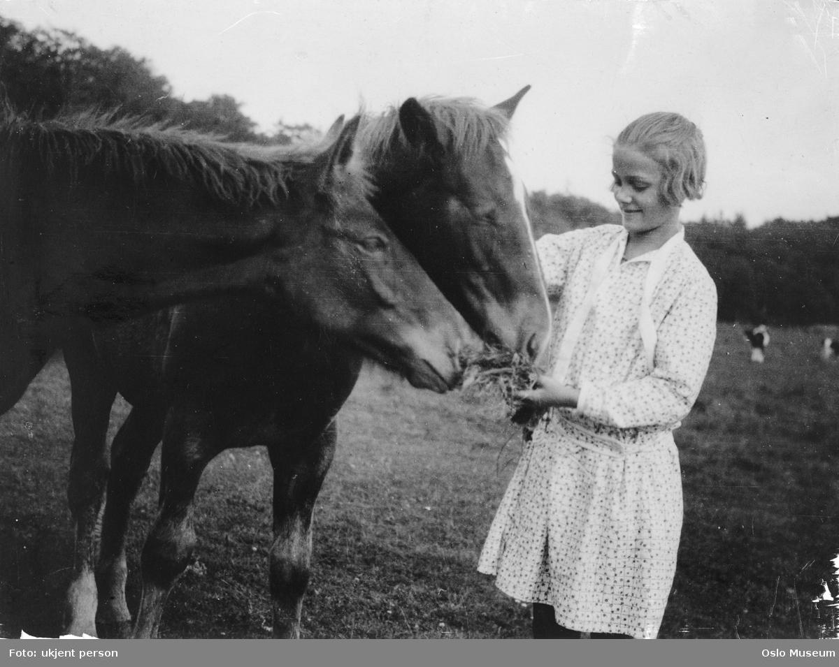 jente, hester