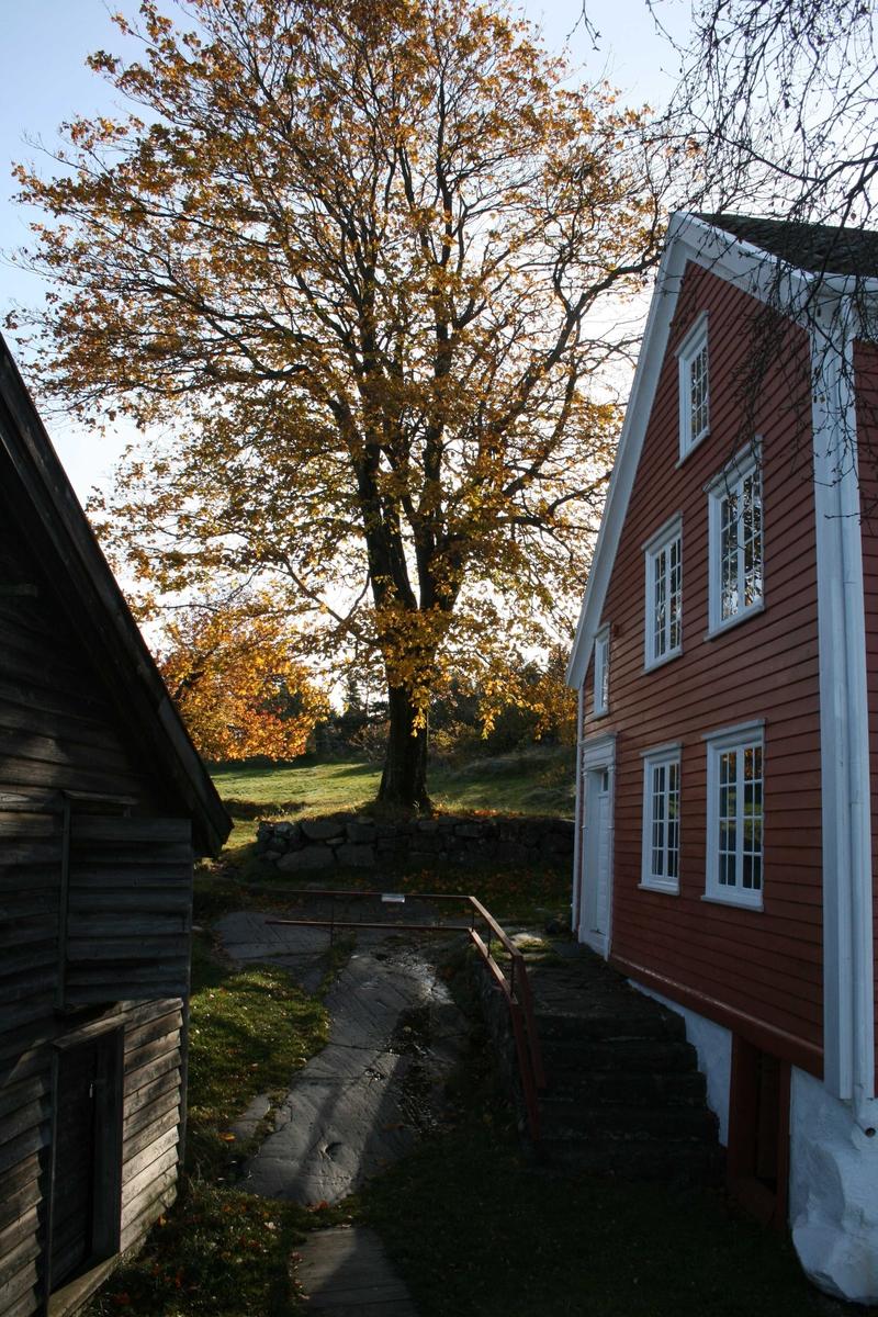 Merdøgaard, gårdstun mellom våningshus t.h. og sjøbod t.v. Tuntre, lønn, midt i mot. Kronen på dette treet skal reduseres, pga nærheten til bygningene.