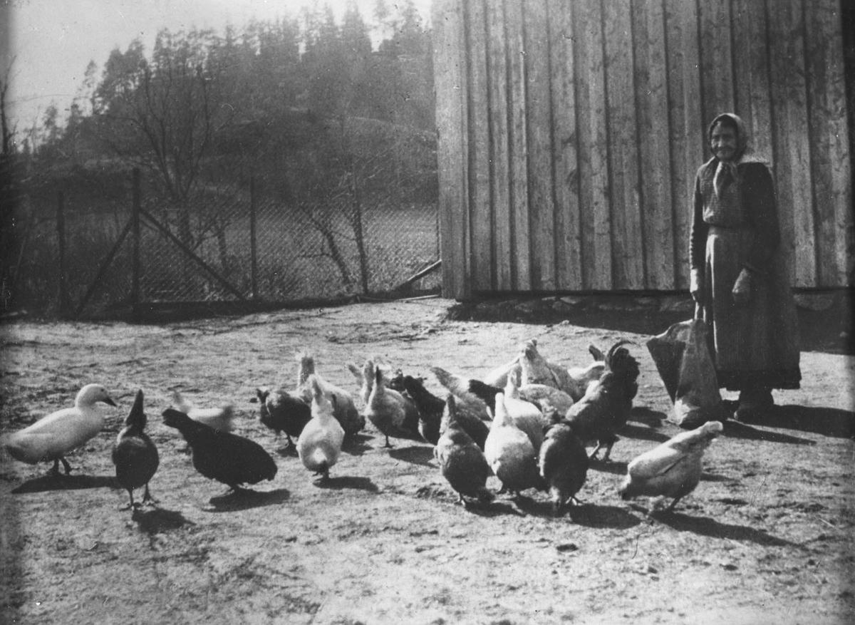 Emma Hansen med hønene på Øvre Kinn.