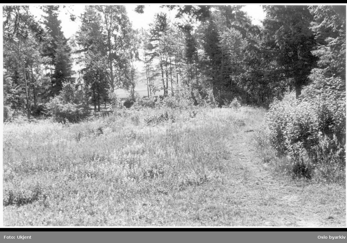Gressbevokst eng ved skog-grensen.