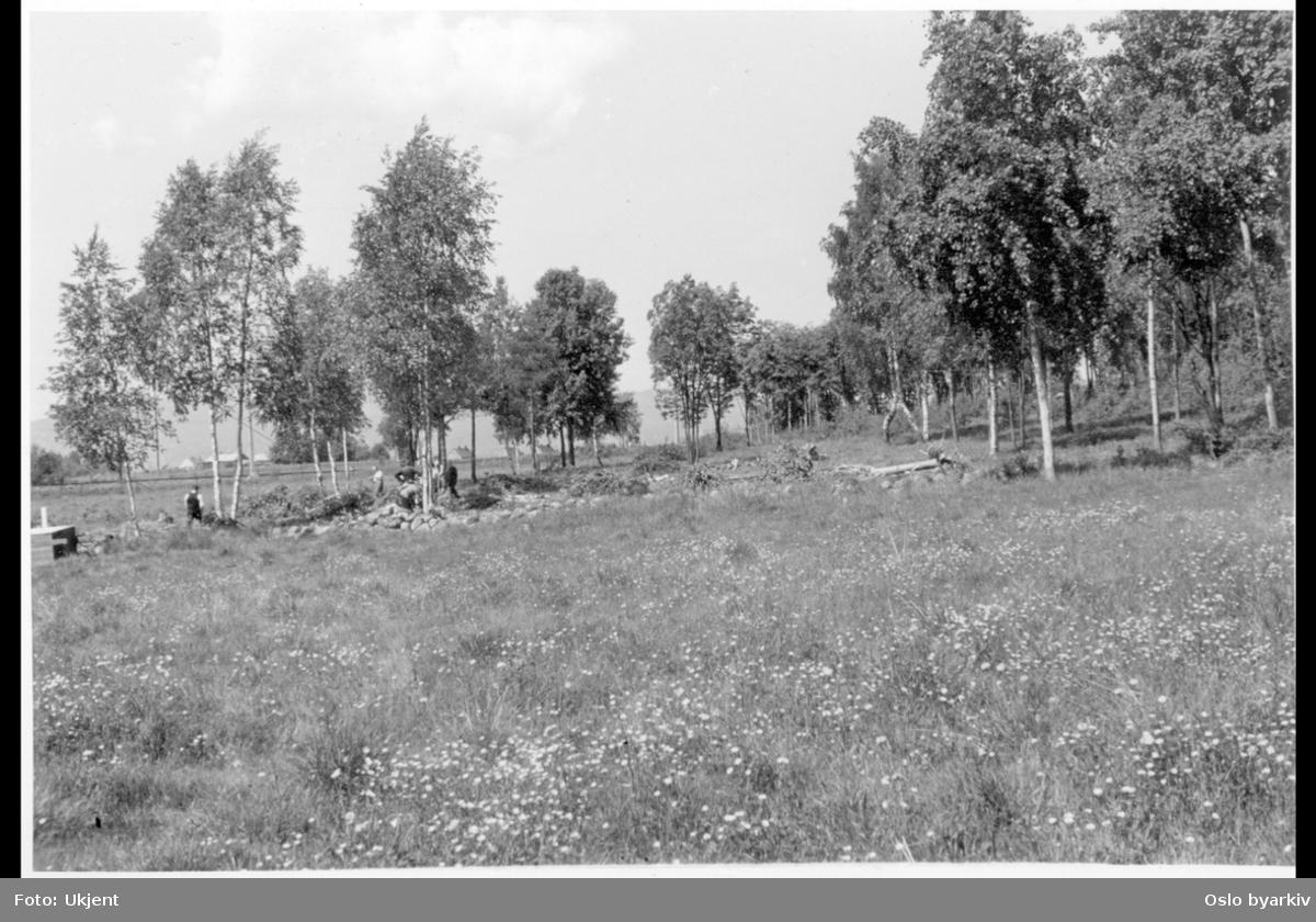 Busk- og skogrydding / fjerning ved randsonen mot skogen.