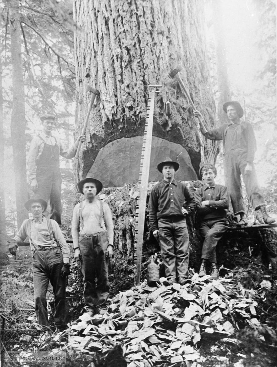 Tømmerhogst i Amerika.ADRESSE: Nesset       Vistdal       Vistdal