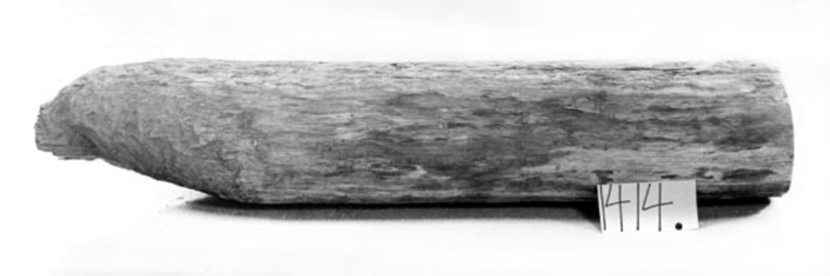 Eikestokken er helt avgnagd slik at stokken er i to deler.  Den avgnagde delen er en rett stammedel. Den andre delen består av den avgnagde stokkens rot som er vokst sammen med en stamme med mindre diameter.  Stokken kommer fra Otertjennliene i Raboskogene.