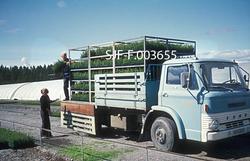 Klargjøring av forsendelse av pottebrett ved Stiklestad plan