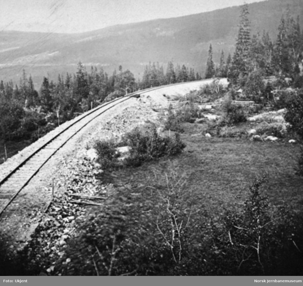 Parti fra linjen i Drøia mellom Haltdalen og Stensli