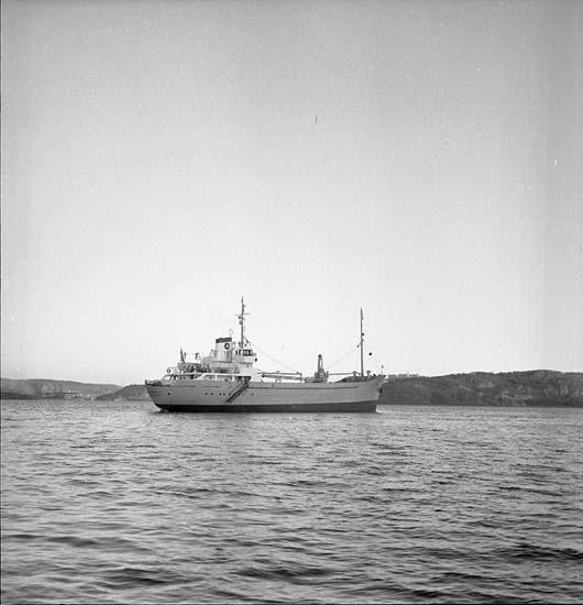 Fartyg nr. 149 M/S Hermia.