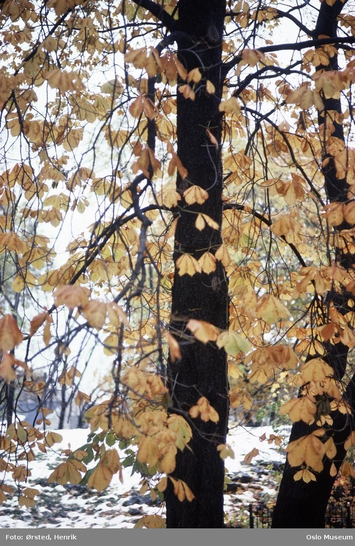 park, trær, høstløv, løvfall, snø