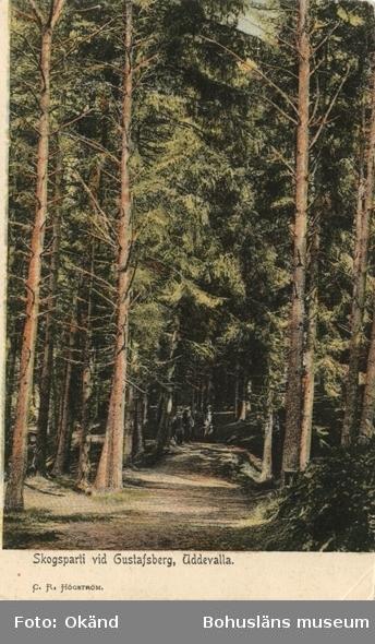 """Tryckt text på vykortets framsida: """"Skogsparti vid Gustafsberg, Uddevalla."""""""
