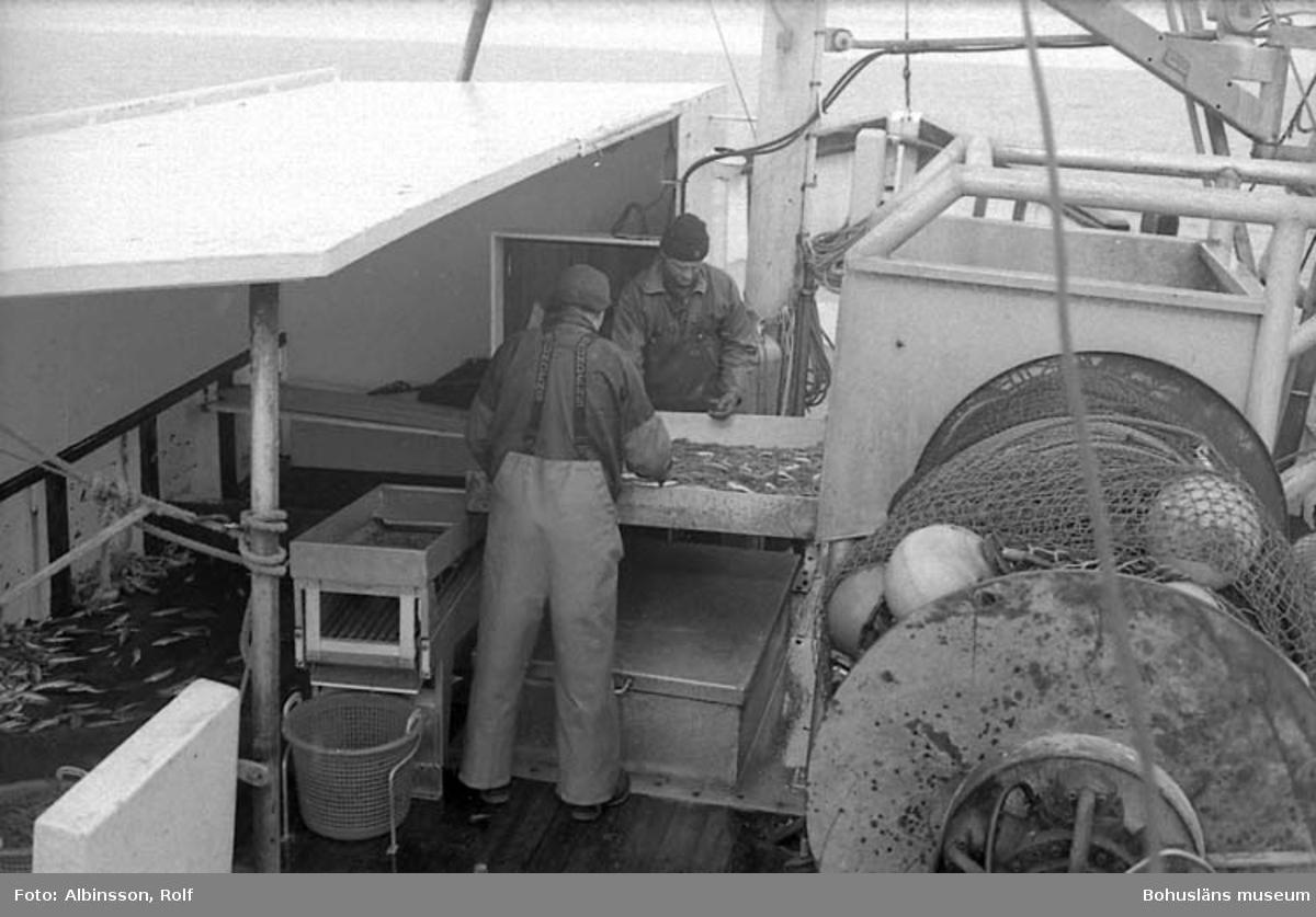 """Enligt fotografens noteringar: """"Från hytten, under klimatskyddet står Bengt Persson och Harald Hansson, de fortsätter med sorteringen. Erling Larsson i hytten medan vi flyttar oss en liten bit.""""  Fototid: 1996-03-06."""