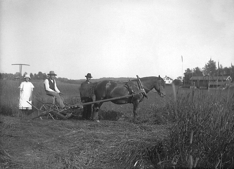 """""""Bernhard Olsson, Märta och Edwin Hansson i Råane, Forshälla, 9/7 1916."""" enligt senare notering."""
