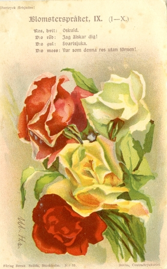 Notering på kortet: Blomsterspråket IX. Ros, Vit: Oskuld. D:o Röd: Jag älskar dig! D:o gul: Svartsjuka. D:o Moss: Var som denna ros utan törnen!