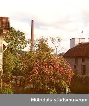 Utsikt från bostadshuset Roten F25s trädgård mot Papyrus och Roten G6 (Trädgårdsgatan 2B). Lila syrénbuskar i förgrunden.