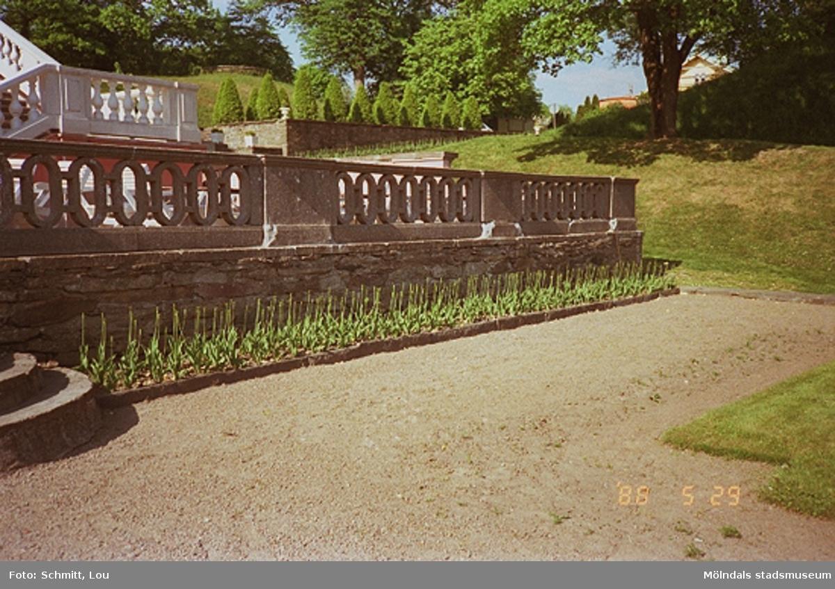 Gunnebo slotts högra entré-del bestående av ett staket tillverkat av sten. Framför detta ligger en grusgång. I bakgrunden till höger skymtar man sockertoppsgranar som står på rad.