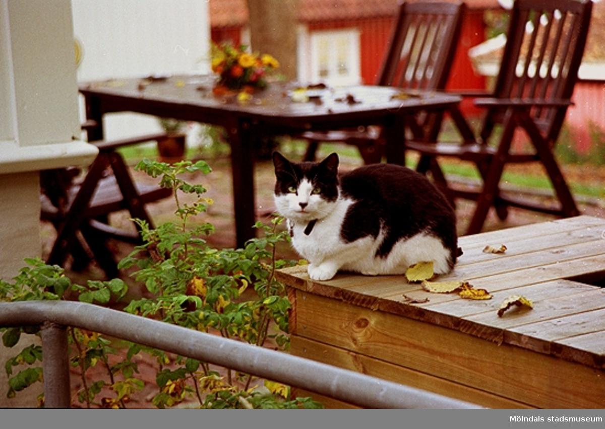 Miljöbild i Kvarnbyn. Katt på ett bord.