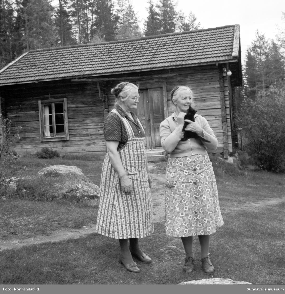 Reportagebilder från ett gammalt timmertorp i Hammarstrand. Två äldre kvinnor och en kattunge.