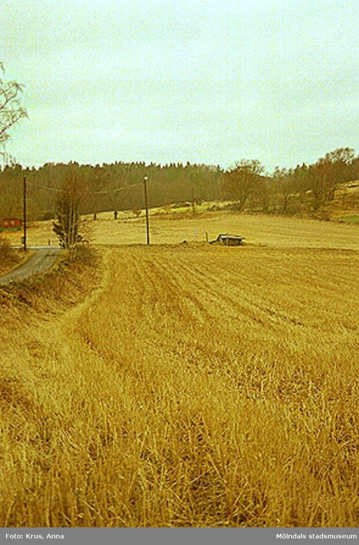 Dvärred - hällkistan i landskapet.