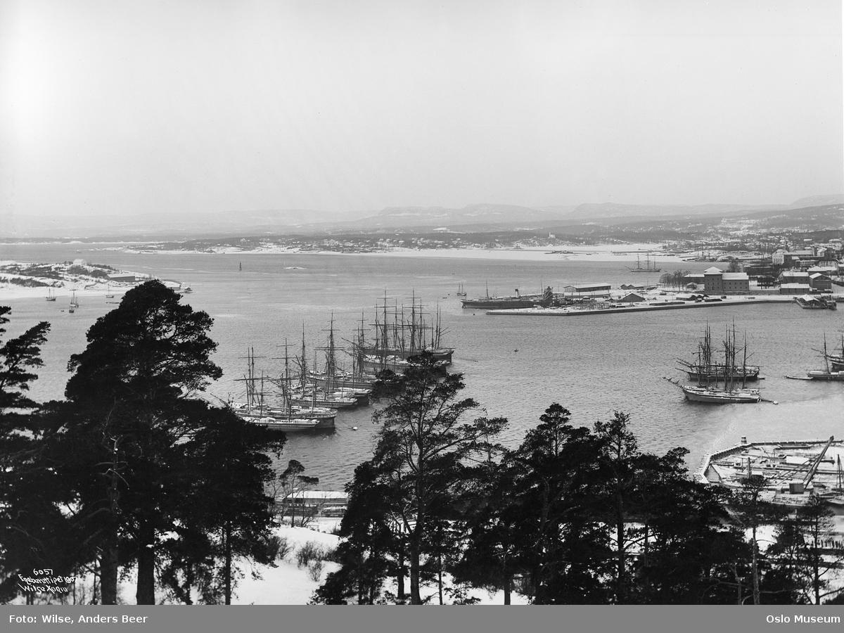 utsikt, furutrær, fjord, øyer, seilskip, havn, snø