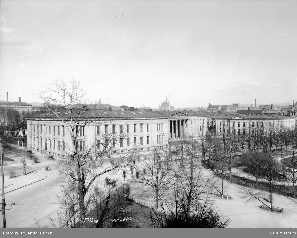 Universitetet, gatekryss, park, trær