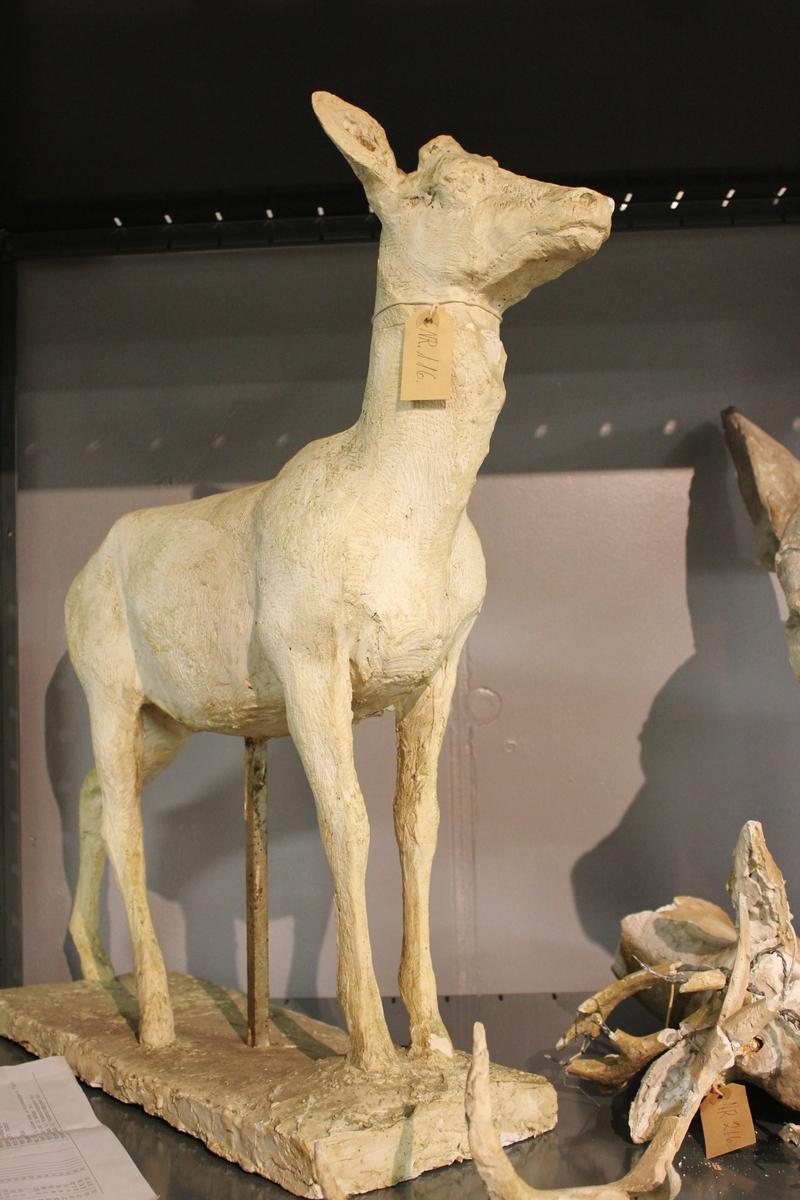 Skulptur i gips av en kronhjort men geviret mangler. Utkast til Kristiansund