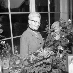 Fotograf Ingeborg Enander i sin dagljusatelje, Stenungsund,