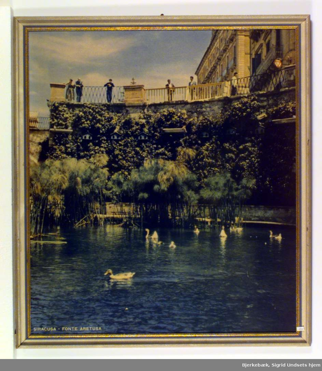 Fra et platå i gateplan står en del mennesker og ser ned på en dam hvor noen svaner og ender svømmer omkring.