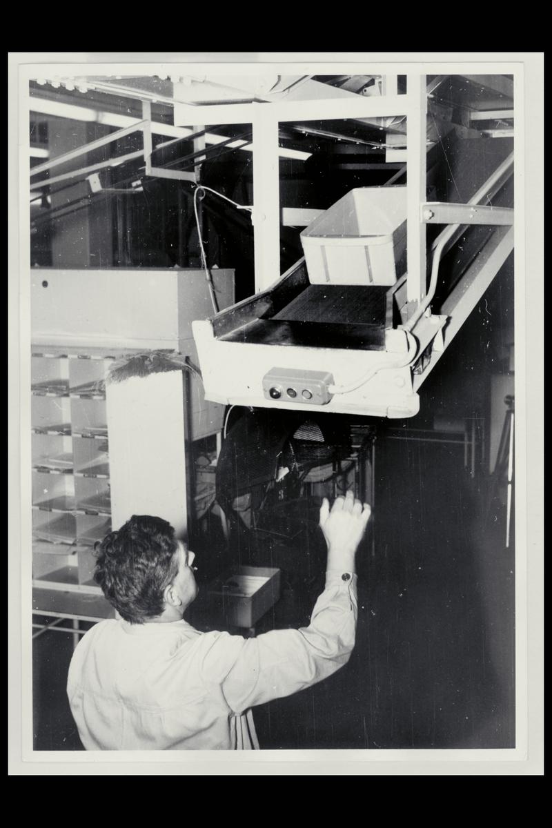interiør, Postgirokontoret, brevavdelingen, mann, post på rullebånd