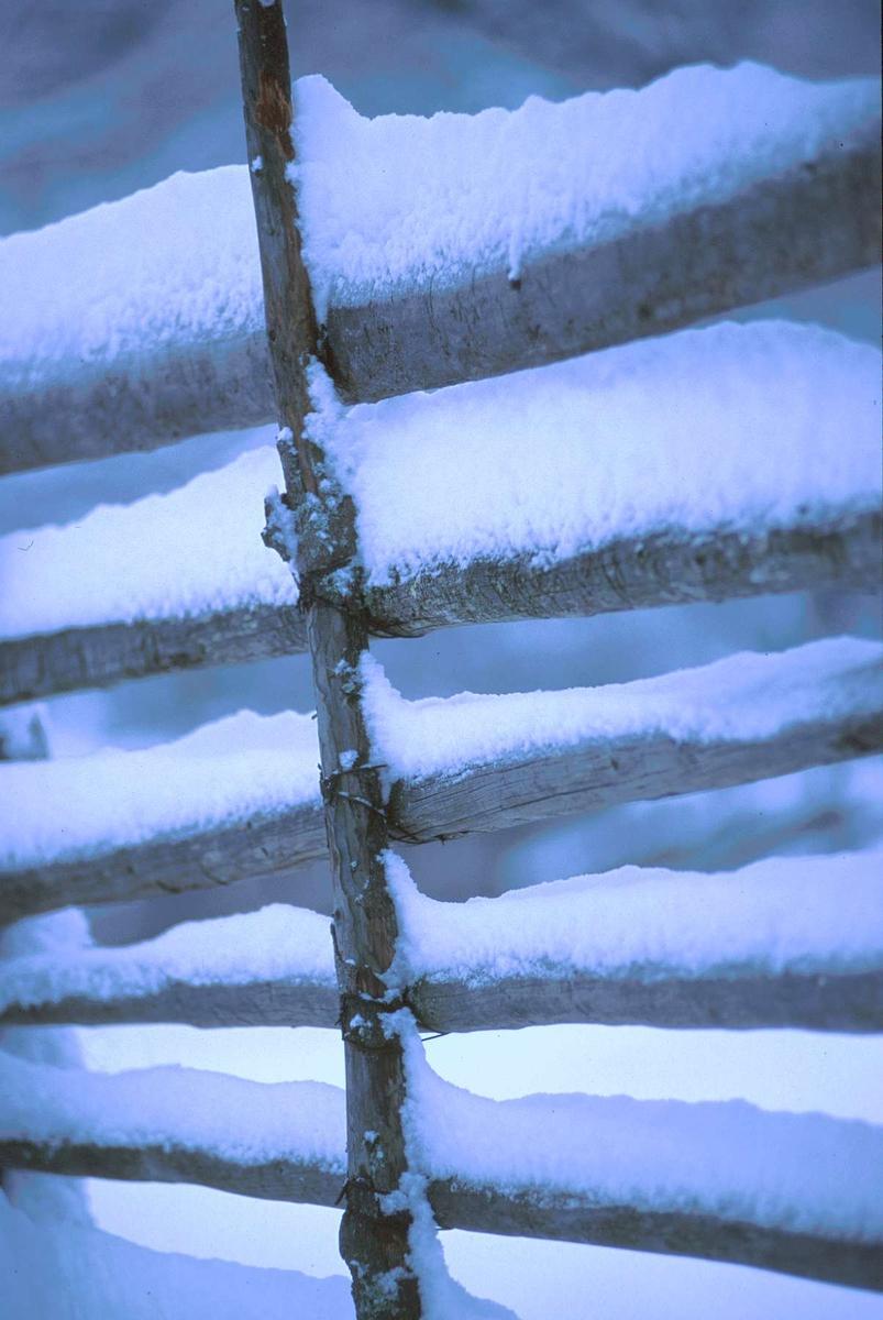 Snødekt gjerde på Øygardsetra, vinter.