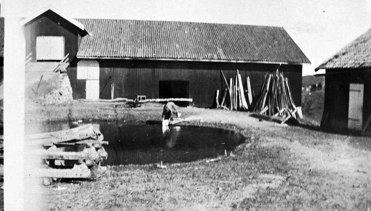 Kragerud gård En kvinne skyller tøy i gårdsdammen. I bakgrunnen Låve med kjørebru. Ytterst til høyre et annet uthus. I forgrunnen til venstre er lagt opp ved. Vedreis er støttet opp mot låveveggen.